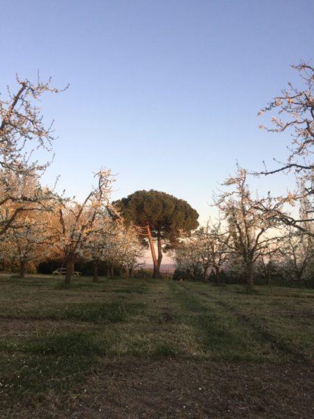 Travail arboricole de la maison Cabos